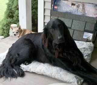 Jack and weezer